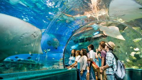 Lotte Hotel Guam, underwater world